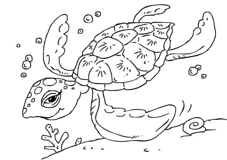 Kleurplaat Schildpad Afb 27229 Kleurplaten Gratis Kleurplaten Schildpad