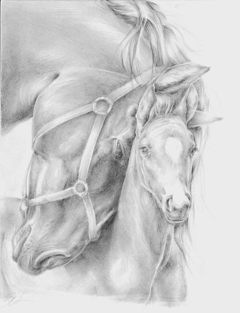 Merrie Veulen Paard Tekeningen Dieren Tekenen Dieren Schilderen