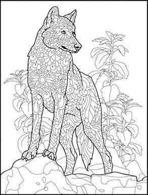 Pin Op Coloring Wolf Fox