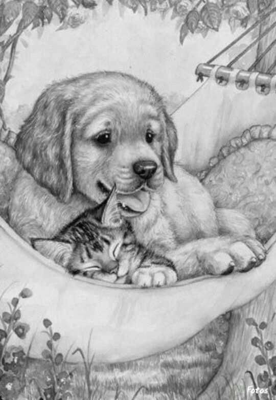 Pin Van Vickie Jolissaint Op Cats And Dogs Dieren Tekenen Hond Tekeningen Dieren Kleurplaten
