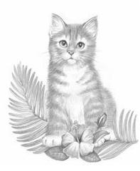 Coloring For Adults Kleuren Voor Volwassenen Cat Art Kitten Drawing Cat Artwork