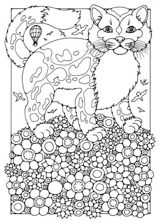Kleurplaat Kat Afb 15823 Kleurplaten Gratis Kleurplaten Kleurboek