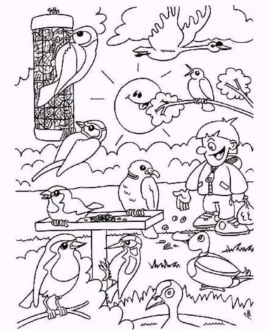 Kleurplaten Voor Volwassenen Papegaai