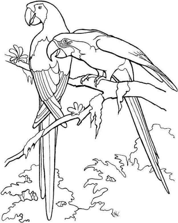 Papegaaien Vogels Tekenen Kleurboek Kleurplaten