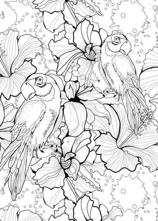 2 Papegaaien Kleurboek Dieren Kleurplaten Kleurplaten