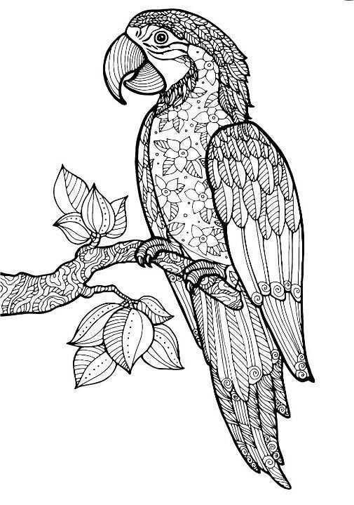Pin Van Tudor Op Coloring Parrot Kleurplaten Lijntekening Dotpainting