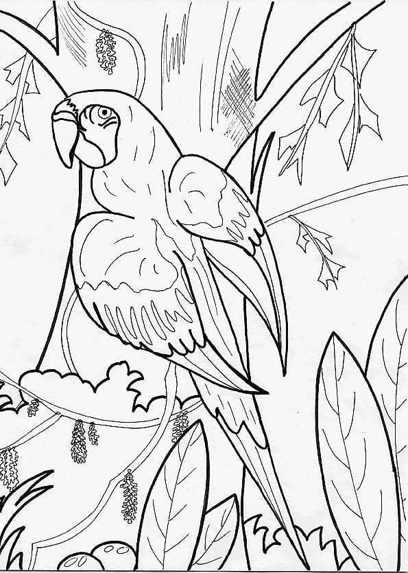 Papegaai In Boom Dingen Om Te Tekenen Vogels Tekenen Dieren Tekenen