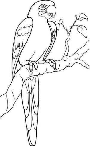 Image Result For Rainforest Macaw Vogels Tekenen Dieren Tekenen Papegaai
