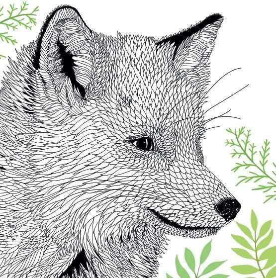 Rode Vos Animal Portraits Illustration Fox Coloring Page Animal Coloring Pages