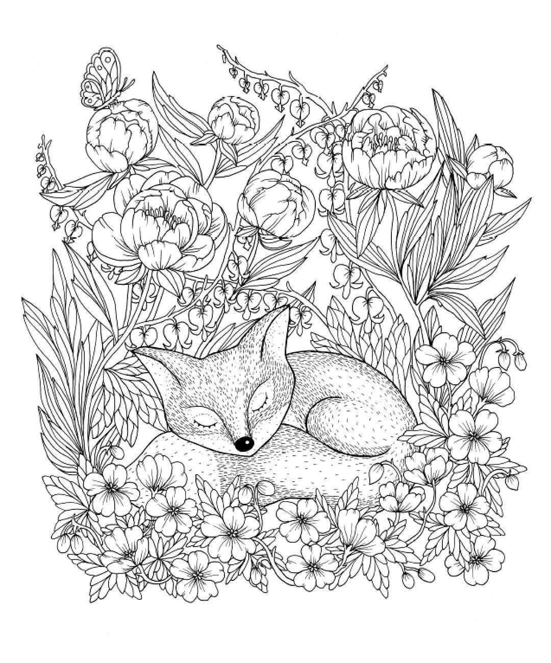 Maria Trolle On Instagram Sleeping Fox From My Upcoming Coloringbook Release 25th Of March Just A Fe Fox Coloring Page Animal Coloring Pages Coloring Pages