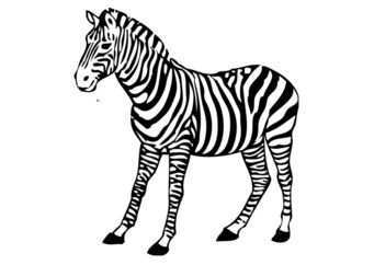 Kleurplaat Zebra Afb 17394 Kleurplaten Zebra Tekening Zebra S
