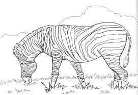 Afbeeldingsresultaat Voor Zebra Kleurplaat Kleurplaten Tekenen Voor Kinderen Zebra S