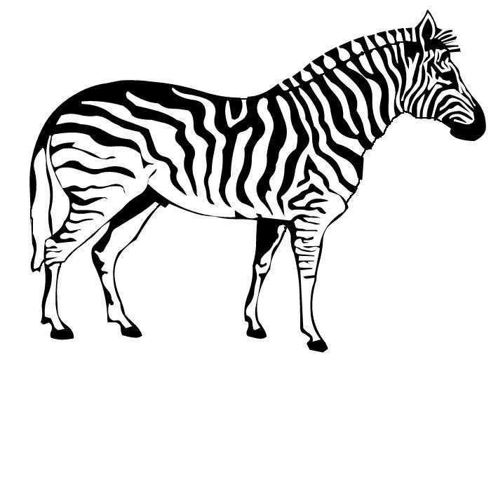 Pin Van Renee Donaldson Op Random Zebra Tekening Zebra S Dieren