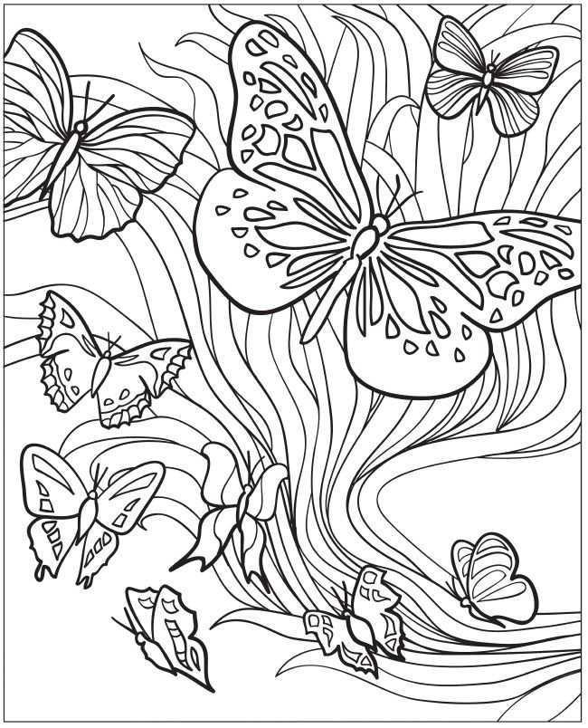 Volwassenen Kleurplaat Vlinders Butterfly Coloring Page Insect Coloring Pages Coloring Pages