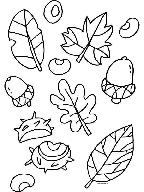 Kleurplaat Herfst Blaadjes Nootjes Kleurplaten Nl Herfst Knutselen Herfst Projecten Herfst Activiteiten