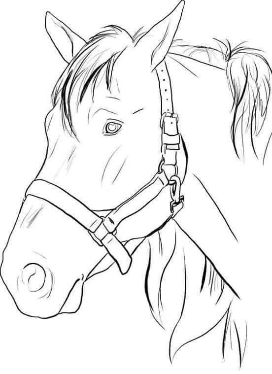 Pin Van Cristina Segu Op Pintura Em Tecido Paard Tekeningen Paardenschets Paardenschilderijen