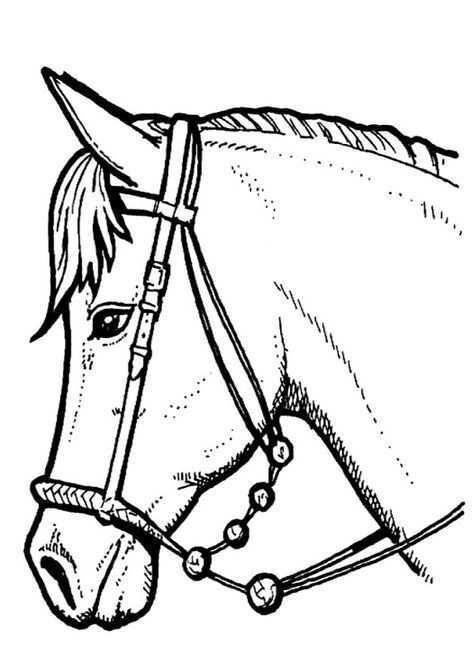 Paarden Kleurplaat Paardenhoofd Paard Tekeningen Dieren Kleurplaten