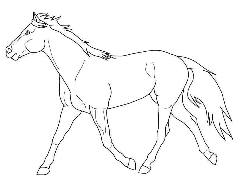 Paarden Kleurplaten Paard Tekeningen Paarden Kleurplaten