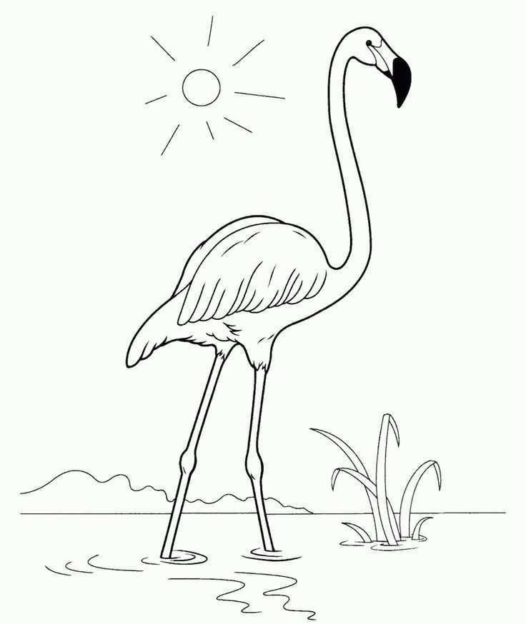 Kleurplaat Flamingo Handwerk Crafts Flamingo Kleurpagina Kleurplaten Flamingo Animal Drawings Pictures To Paint