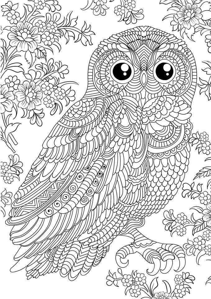 1928841 10156534814880045 8464913795688162808 N Jpg 679 960 Pixels Owl Coloring Pages