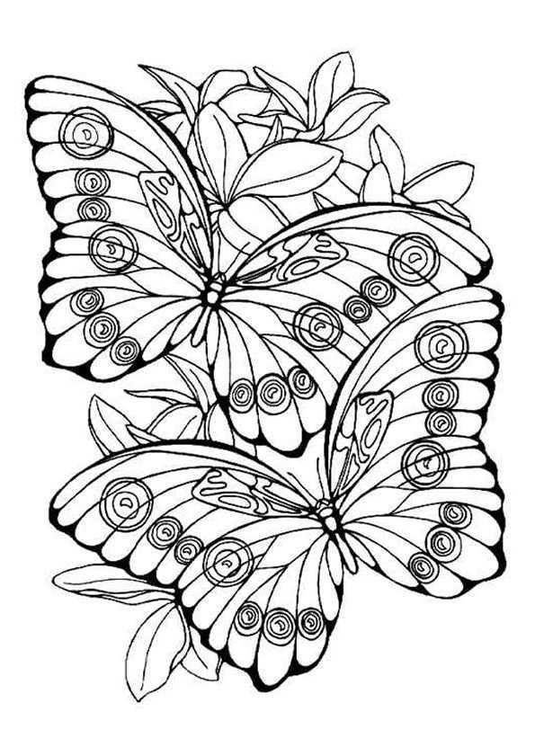 Kleurplaat Vlinders 5870 Dieren Kleurplaten Kleurplaten Kleurboek
