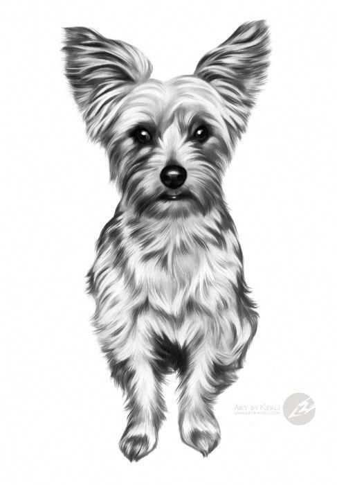 Coco Yorkshire Terrier Graphite Pencil Drawing By Kerli Toode Art By Kerli Yorkshireterrier Yorkshire Yorkshire Terrier Yorkshire Terrier Funny Terrier