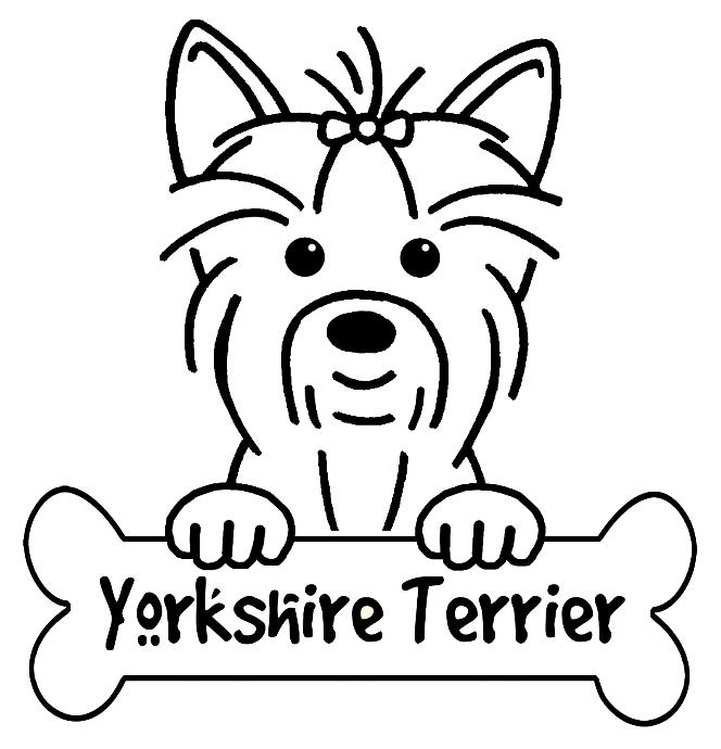 Coloringpageyorkie Yorkshire Terrier Boyama Sayfalari Kopek