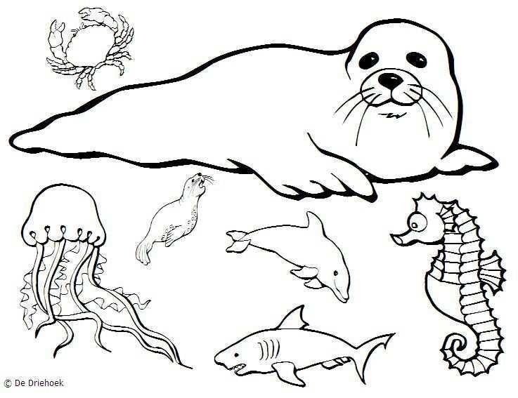 Zeedieren Tekenen Google Zoeken Sea Life Artwork Sketches Watercolor Sea